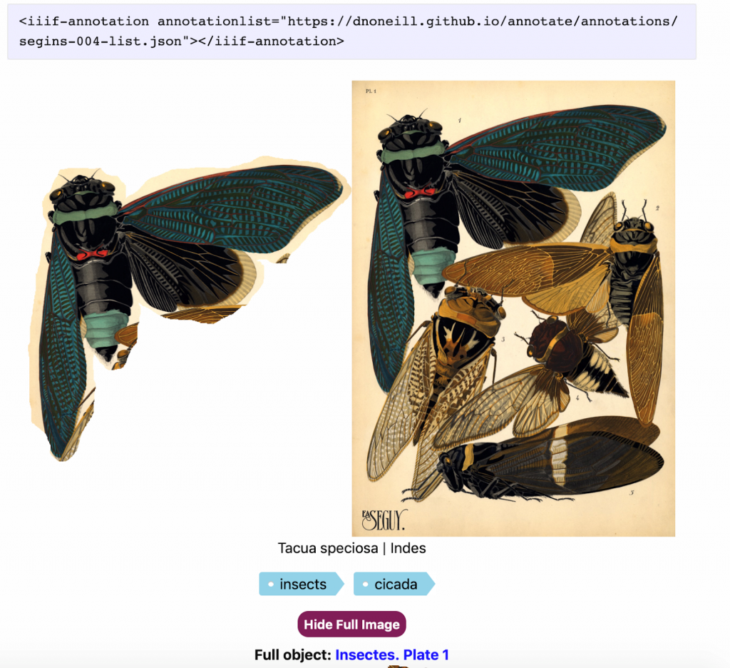On the right, a full sketch of preserved cicadas, on the left, an example of the image cut out as an IIIF annotation.